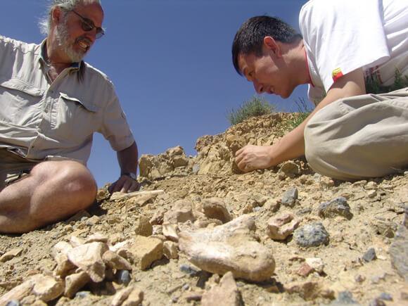 Xu Xing (IVPP) и James Clark (George Washington University) собирают останки динозавров