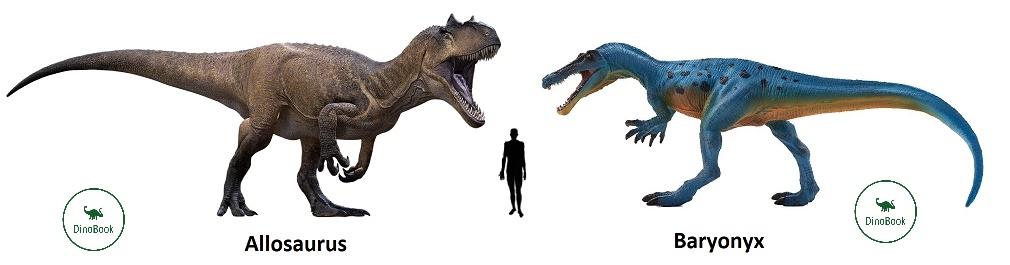 Сравнение размеров аллозавра и барионикса