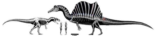 Сравнение размеров аллозавра и спинозавра