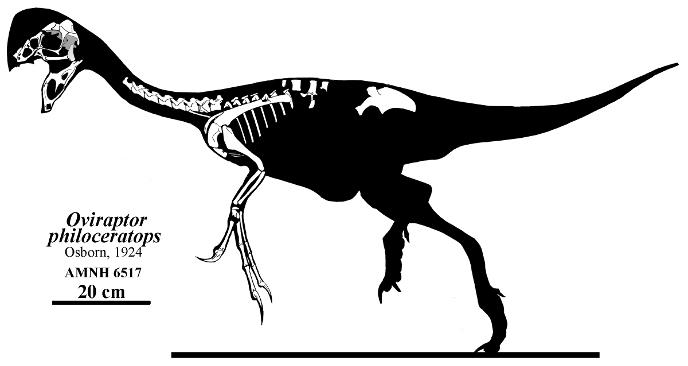 Скелет овираптора