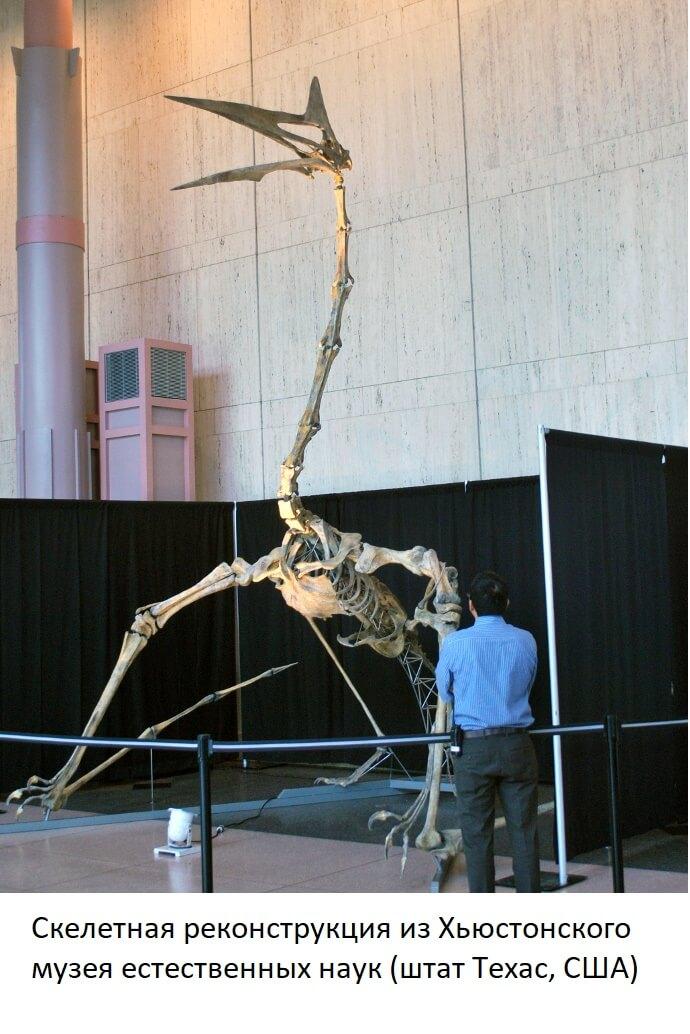 Скелет кетцалькоатля в музее