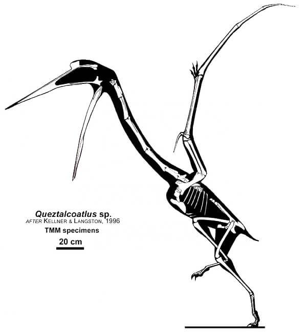 Строение скелета кетцалькоатля