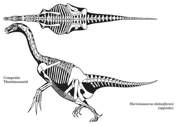 Скелет теризинозавра