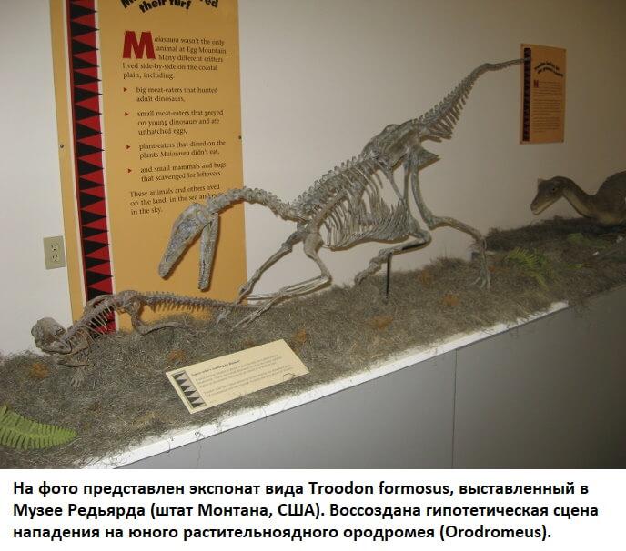 Реконструкция охоты троодона