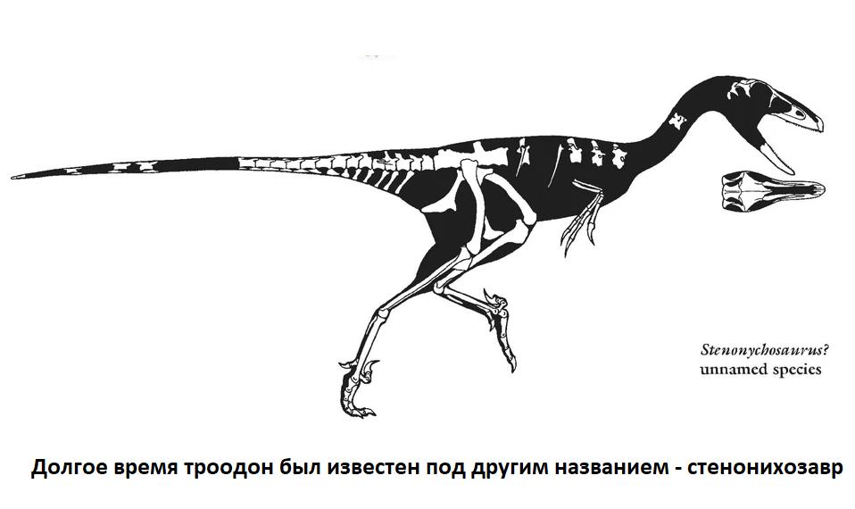 Скелет троодона