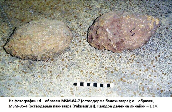 Остеодермы балохизавра