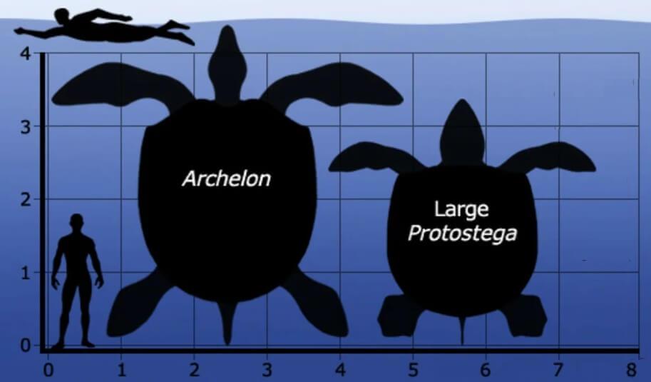 Сравнение размеров архелона и простега