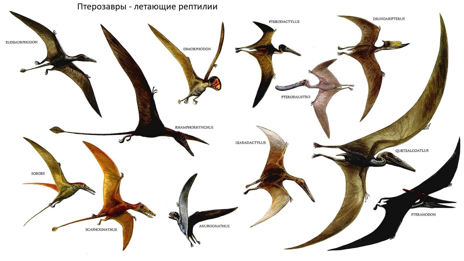 Представители птерозавров