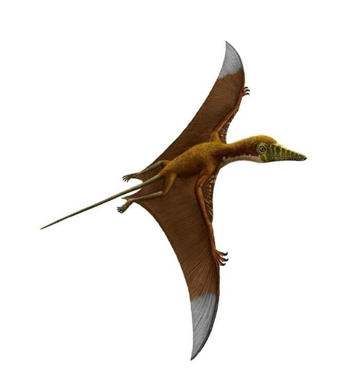 Тело птерозавров было покрыто пикнофибрилами