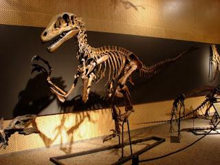 Скелет ютараптора в палеопарке