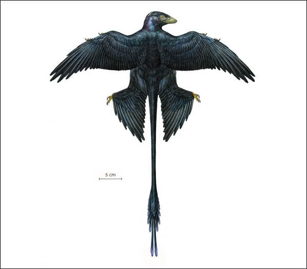 Окраска перьев микрораптора была радужно - черной