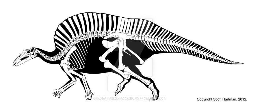 Строение скелета уранозавра
