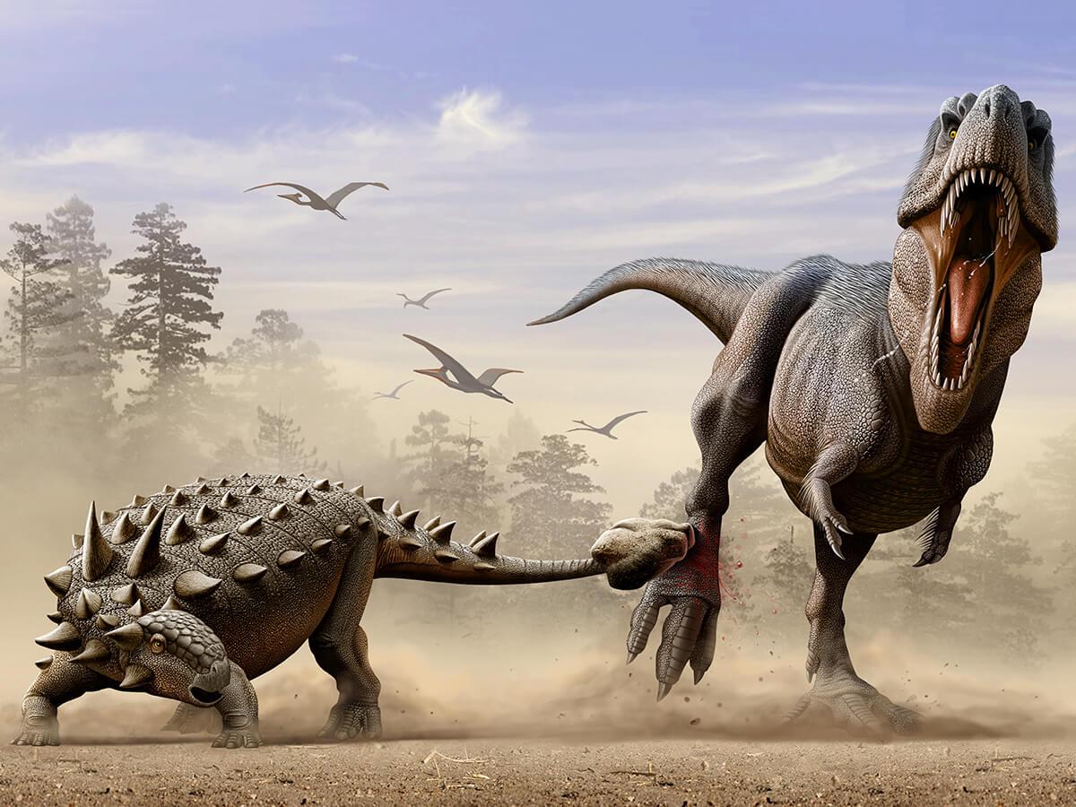 Попади анкилозавр по ногам хищнику он бы лишил тирекса возможности охотиться и добыть себе пищу