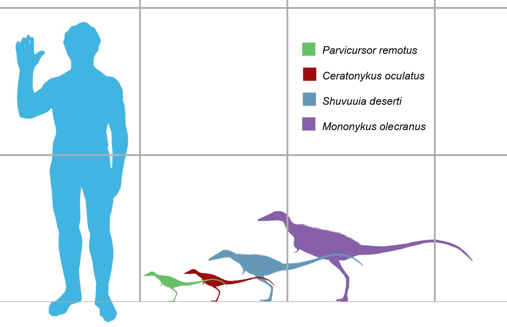 Сравнение размеров других альверозавридов с моноником