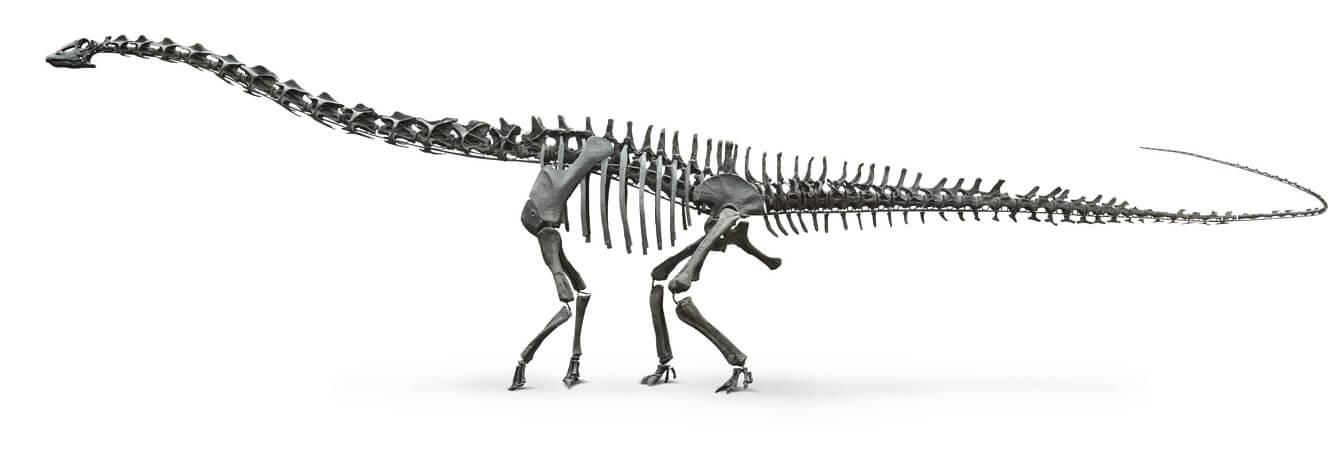Строение скелета диплодока