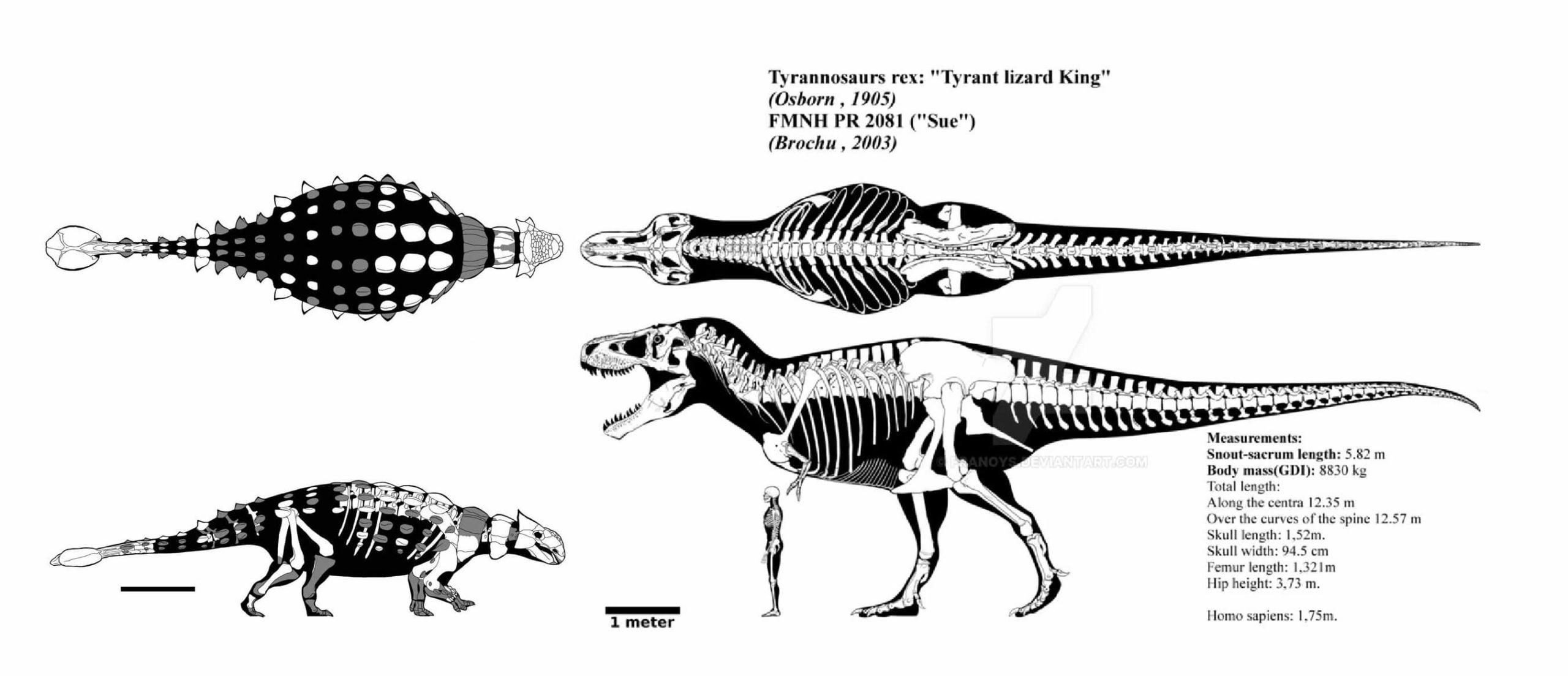 Сравнение размеров анкилозавра и тираннозавра