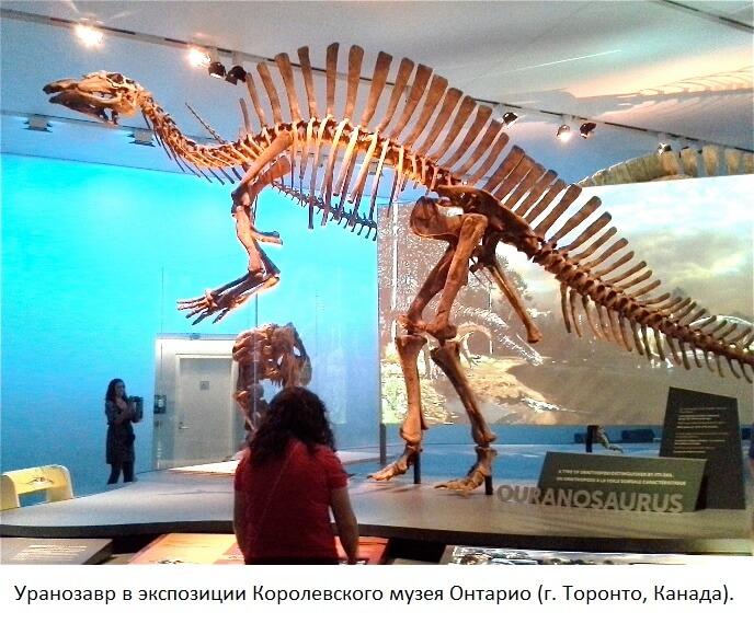Скелет уранозавра в музее Онтарио