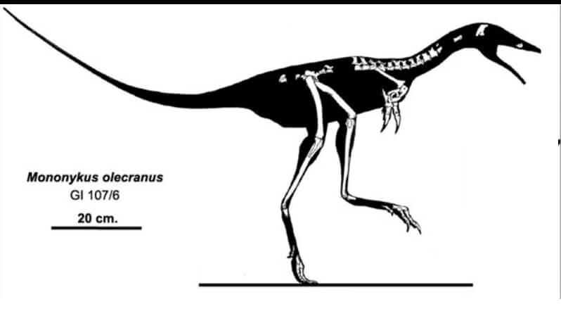 Скелет мононика