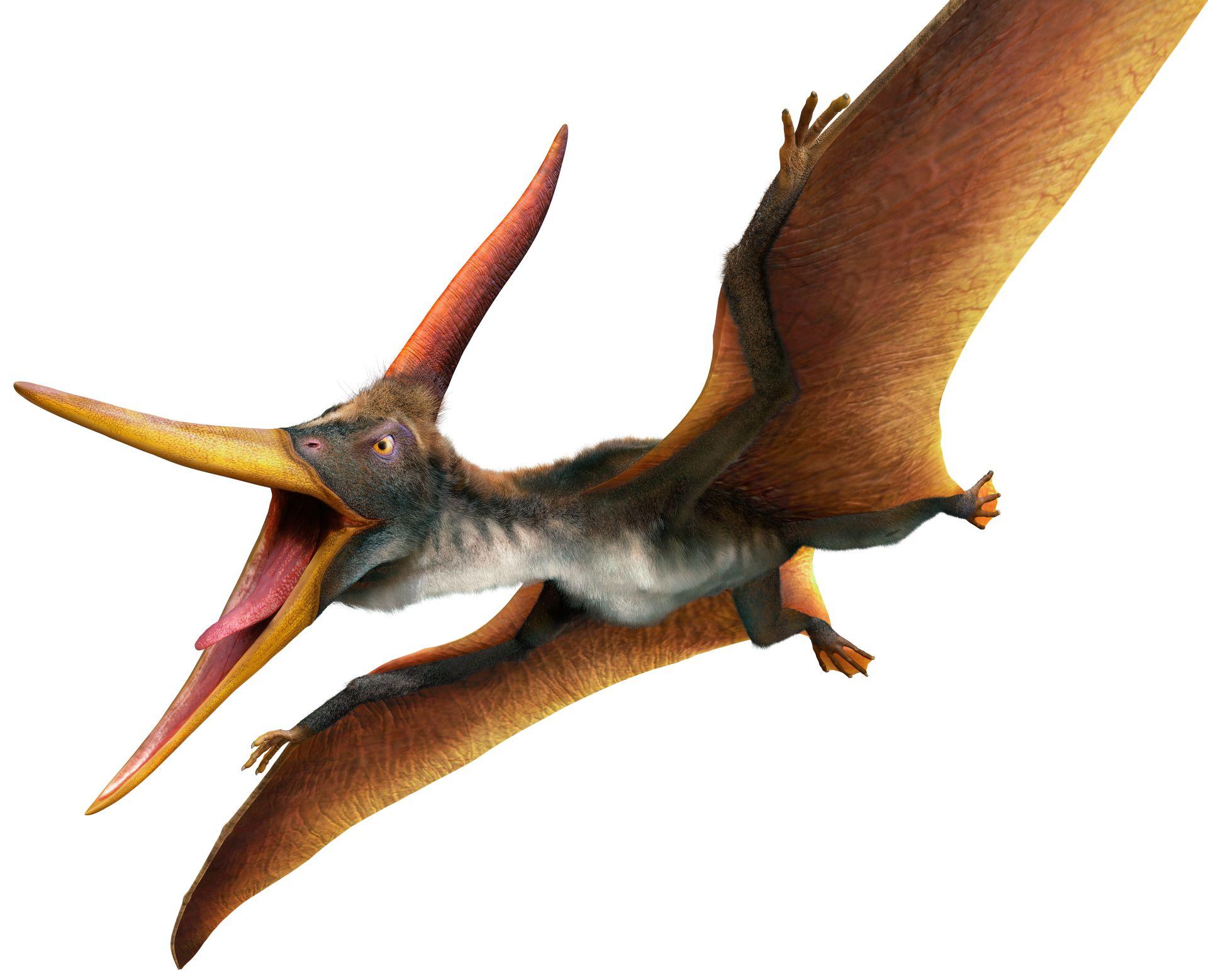 Самки птеранодона отличались широким родовым каналом
