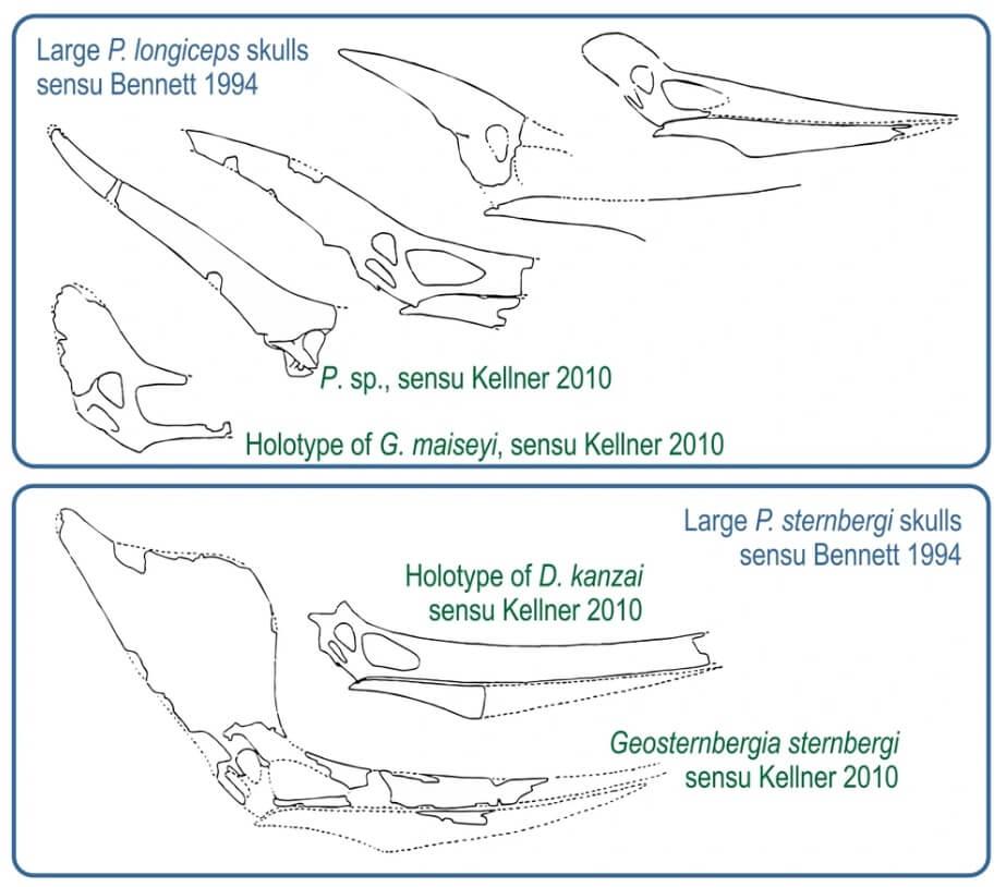 Альтернативная классификация птеранодонов, предложенная Келлнером