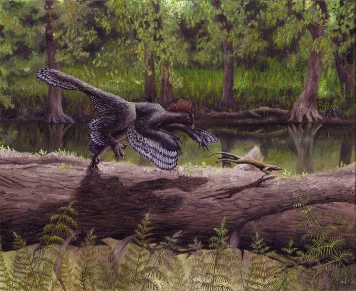 Рацион анхиорниса включал насекомых и ящериц