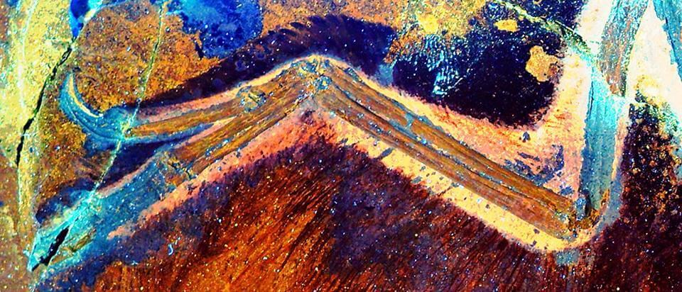 Сканирование отпечатка скелета анхиорниса в ультрафиолетовом свете