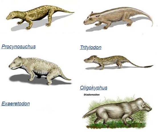 Отдельные представители цинодонтов